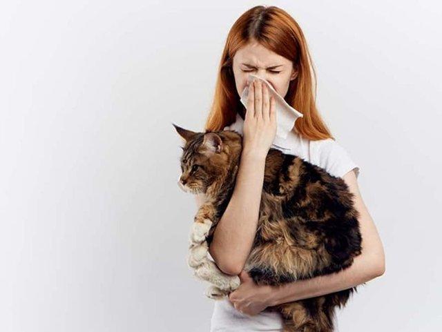 Аллергия на кошек: симптомы и что делать?