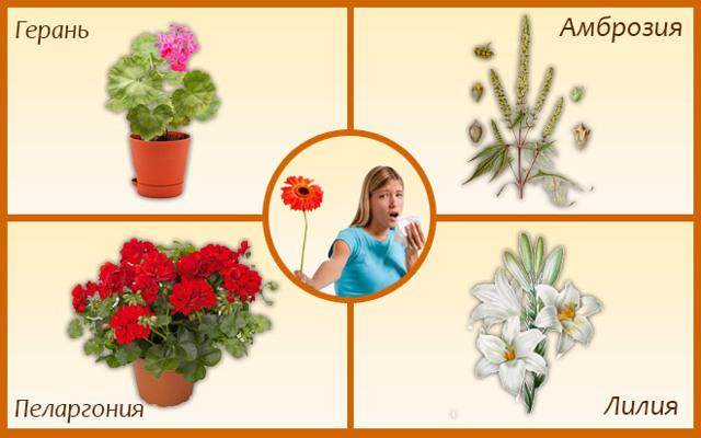 Аллергия на цветы - решение проблемы есть!