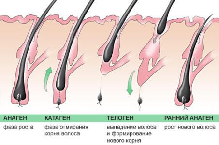 Гнездная алопеция : причины, симптомы, диагностика, лечение