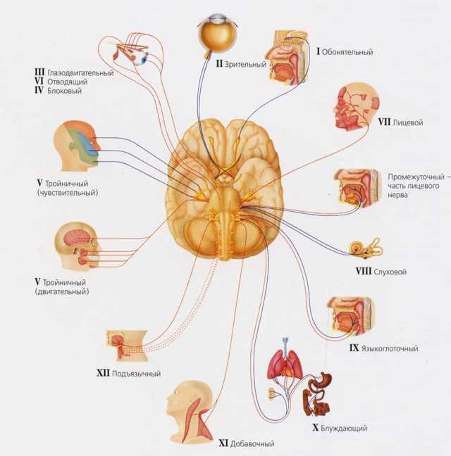Бульбарный синдром : причины, симптомы, диагностика, лечение