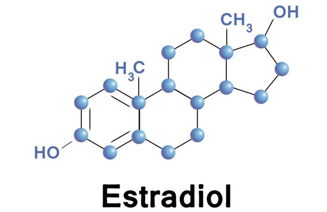 Как эстрадиол влияет на наш организм?