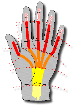 Повреждение сухожилий сгибателей пальцев кисти: причины, симптомы, диагностика, лечение