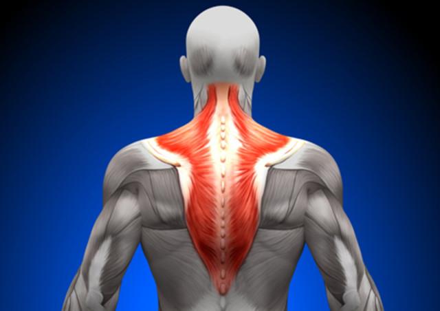 Трапециевидная мышца и боль в шее