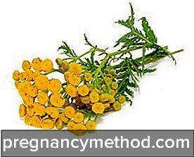 Пижма для прерывания беременности : инструкция по применению