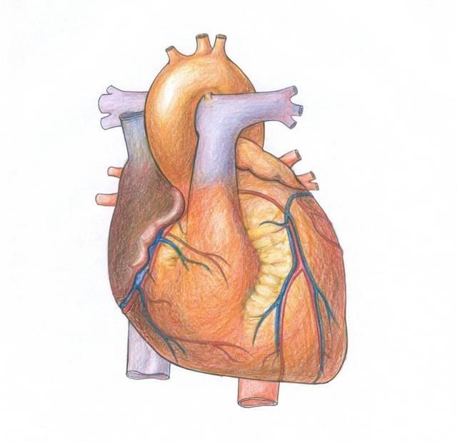 Рестриктивная кардиомиопатия у детей: причины, симптомы, диагностика, лечение