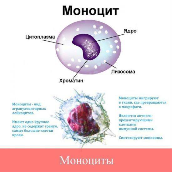 Атипичные мононуклеары : причины появления и морфология