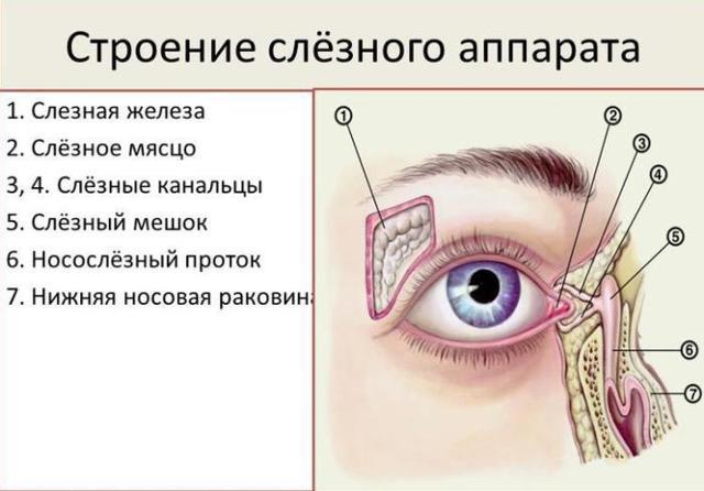Дакриоцистит: причины, симптомы, диагностика, лечение