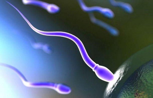 Какая вероятность беременности во время месячных?