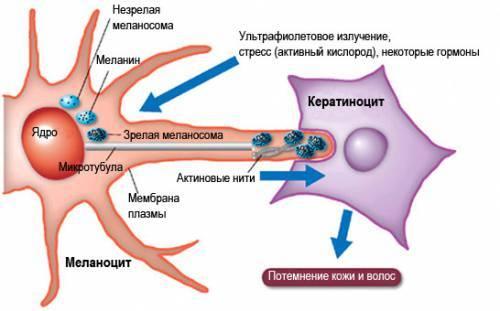 Невусы: причины, симптомы, диагностика, лечение