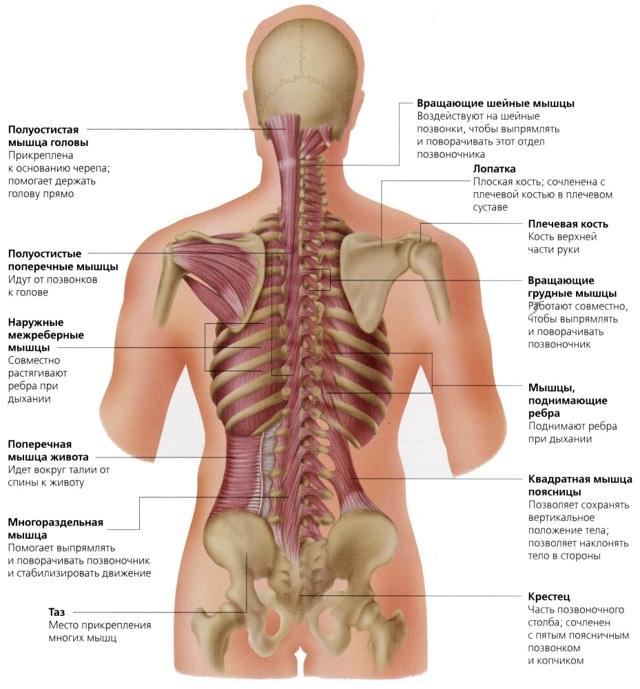 Что делать, если болит спина?