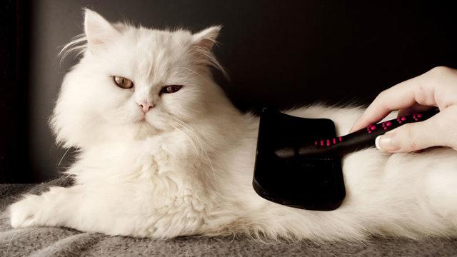 Комки шерсти в желудке кошек